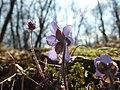 Měňany, Pod tobolským vrchem, květiny.JPG