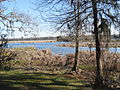 Magnolia Plantation and Gardens - Charleston, South Carolina (8556539386).jpg