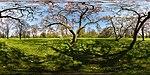 Magnolienbaum, Wiesbaden-Biebrich, 360x180, 160409, ako.jpg
