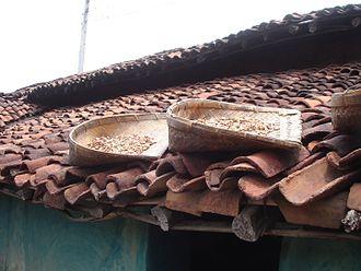 Madhuca longifolia - Sun drying of Mahua (Madhuca) using Traditional Supa prepared from Bamboo in Chhattisgarh Village, India
