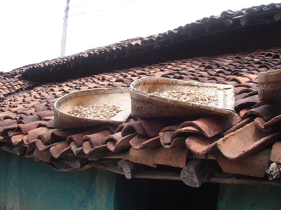 Mahua Drying by Pankaj Oudhia