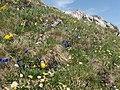 Malá Fatra, kvety v júni (3).jpg