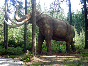Full size life reconstruction of a mammoth (Ma...
