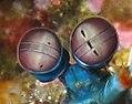 Mantis Shrimp Eyes.JPG