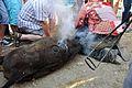 Marquage d'un taureau (ferrade) en Camargue.JPG