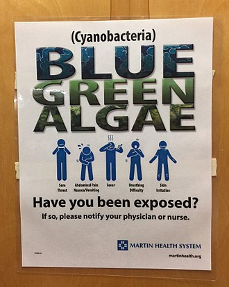 St. Lucie River - Flyer posted by Martin County's Martin Memorial Hospital warning residents about the 2016 algae blooms.