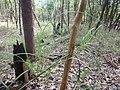 Mata de Igapó - panoramio.jpg