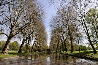 Maubuisson Abbey - An avenue of sycamores in the abbey's grounds
