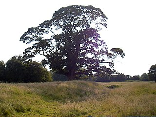 Meaux, East Riding of Yorkshire Hamlet in the East Riding of Yorkshire, England