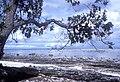 Merir AKK Reef Flats.jpg