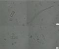 Microbentos fitobentos diatomáceas.png