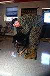 Miramar military working dogs take over The Great Escape 130214-M-OB827-228.jpg