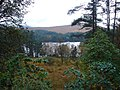 Mixed vegetation beside Loch Ossian - geograph.org.uk - 265377.jpg