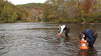 Little Tennessee River - Montreat College students explore the Little Tennessee River (5149490458)