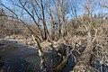Moosburg Mitterteich-Halbinsel Uferzone totes Holz 28012016 0414.jpg