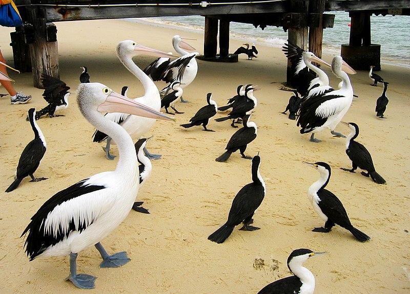 File:Morton Island Birds (367723655).jpg