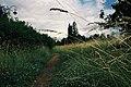 Moscow State University, footpath near Lomonosovsky Prospect (21221299126).jpg