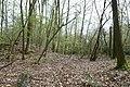 Motte op de Butsberg te Tielt-Winge - 371147 - onroerenderfgoed.jpg