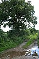 Muddy Waters - geograph.org.uk - 510365.jpg