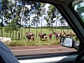 """Mulas com as """"tralhas"""" da comitiva de boiadeiros - panoramio.jpg"""