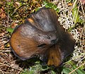 Mushroom in Switzerland.jpg