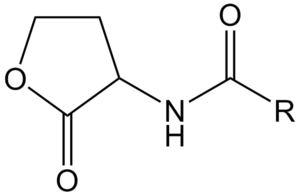 Lactonase - General chemical structure of an N-acyl homoserine lactone