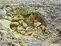 NZ sulfur NI.jpg