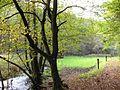 Naafbachtal 2008 10 19.jpg