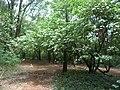 Nairobi Arboretum Park 47.JPG