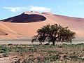 Namib Dos.JPG