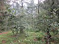 Naran Valley 4.jpg