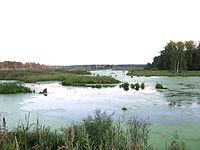 Parco nazionale Elk Island (regione di Mosca) .jpg