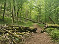 Nationalpark Hainich craulaer Kreuz 2020-06-03 8.jpg