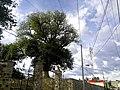 Natural - panoramio (2).jpg