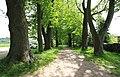 Naturdenkmal Lindenallee in Lößnitz Erzgebirge 2H1A2807WI.jpg