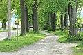 Naturdenkmal Lindenallee in Lößnitz Erzgebirge 2H1A2906WI.jpg