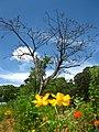 Natureza - panoramio (2).jpg