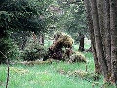 Naturpark Arnsberger Wald fd (3).jpg