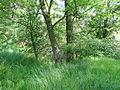 Naturschutzgebiet Heuckenlock 21.05.2014 23.JPG