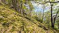 Naturschutzgebiet Schenkenberg WDPA ID 165380 DE-TH Hangmischwald hier vorwiegend junge Eichen,Pionierrasen mit Moosen und Flechten I.jpg