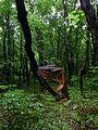 Nekhvoroschi Vol-Volynskyi Volynska-zakaznyk forest-Nekhvoroschi-3.jpg