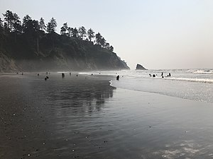 Neskowin Ghost Forest - Image: Neskowin Ghost Forest August 2017