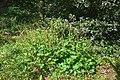 Neuer Botanischer Garten Marburg - 0022.jpg