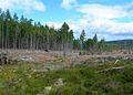 Newtyle Forest - geograph.org.uk - 518005.jpg