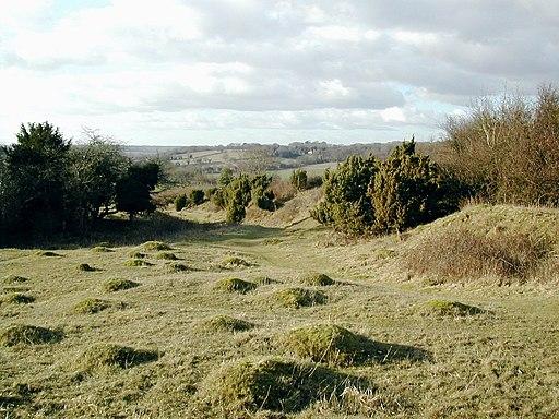 Noar Hill 02