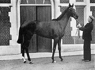 Nun Nicer British-bred Thoroughbred racehorse