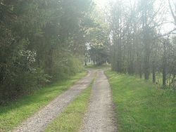 Oak Hill, Cumberland State Forest, Cumberland County, Virginia - road to property, house in trees in distance.jpg