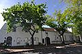 Oak trees, Dorp Street, Stellenbosch.jpg