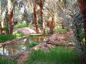 Oasis de Timimoun en Argelia