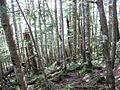 Okuchichibu-Forest 04.jpg